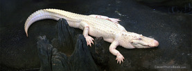 Albino Alligator, Free Facebook Timeline Profile Cover, Animals