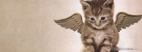 Angel Kitten, Free Facebook Timeline Profile Cover, Animals