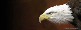 Bald Eagle, Free Facebook Timeline Profile Cover, Animals