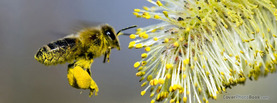 Bee Pollen, Free Facebook Timeline Profile Cover, Animals