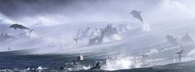 Bottlenose Dolphins Surf, Free Facebook Timeline Profile Cover, Animals