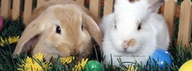 Brown White Easter Bunnies Eggs, Free Facebook Timeline Profile Cover, Animals