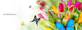 Butterflies and Flowers, Free Facebook Timeline Profile Cover, Animals