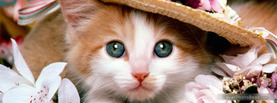 Cat with Hat, Free Facebook Timeline Profile Cover, Animals