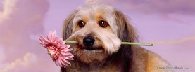 Charming Dog Flower, Free Facebook Timeline Profile Cover, Animals