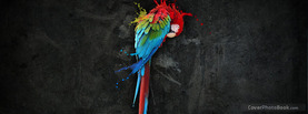 Colorful Bird, Free Facebook Timeline Profile Cover, Animals