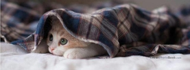 Cute Cat Peaking Under Cloth, Free Facebook Timeline Profile Cover, Animals