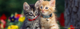 Cute Kitten Couple, Free Facebook Timeline Profile Cover, Animals