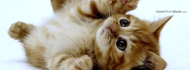 Cute Kitten Playing Lay on Back, Free Facebook Timeline Profile Cover, Animals