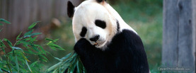 Cute Panda Bamboo, Free Facebook Timeline Profile Cover, Animals