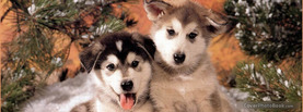 Cute Young Dogs, Free Facebook Timeline Profile Cover, Animals