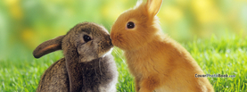 Easter Bunnies Kiss Brown Yellow, Free Facebook Timeline Profile Cover, Animals