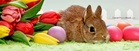 Easter Holiday Tulips Brown Bunny, Free Facebook Timeline Profile Cover, Animals