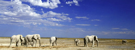 Elephants in Desert, Free Facebook Timeline Profile Cover, Animals