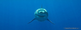 Great White Shark Front, Free Facebook Timeline Profile Cover, Animals