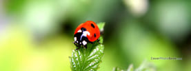 Ladybug on Leaf Zoom, Free Facebook Timeline Profile Cover, Animals