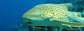 Leopard Shark Reef, Free Facebook Timeline Profile Cover, Animals