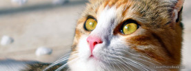 Lovely Cat Eyes, Free Facebook Timeline Profile Cover, Animals