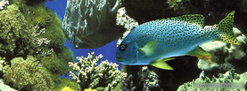 Lovely Fish Coral, Free Facebook Timeline Profile Cover, Animals