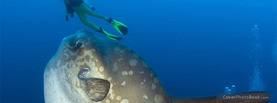 Ocean Sunfish Diver, Free Facebook Timeline Profile Cover, Animals