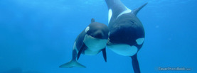 Orcas playing happy, Free Facebook Timeline Profile Cover, Animals