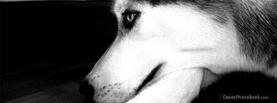 Pretty Husky Model, Free Facebook Timeline Profile Cover, Animals
