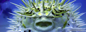 Puffer Fish, Free Facebook Timeline Profile Cover, Animals