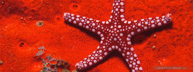 Red Starfish, Free Facebook Timeline Profile Cover, Animals