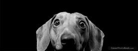 Scary Dog Staring, Free Facebook Timeline Profile Cover, Animals