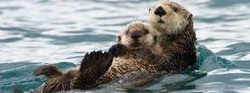 Sea Otter, Free Facebook Timeline Profile Cover, Animals