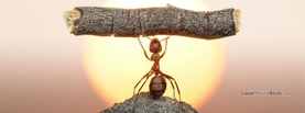 Strong Ant Lifts Wood Sun, Free Facebook Timeline Profile Cover, Animals