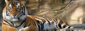 Tiger Protector, Free Facebook Timeline Profile Cover, Animals