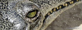 Water Crocodile, Free Facebook Timeline Profile Cover, Animals