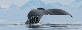 Whale Tail Sea, Free Facebook Timeline Profile Cover, Animals