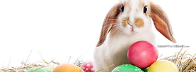 White Brown Easter Bunny Eggs, Free Facebook Timeline Profile Cover, Animals