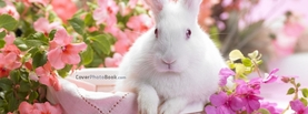 White Easter Rabbit in Basket, Free Facebook Timeline Profile Cover, Animals