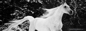 White Horse, Free Facebook Timeline Profile Cover, Animals