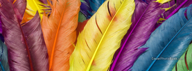 Colorful Feathers, Free Facebook Timeline Profile Cover, Creative