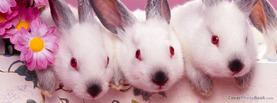 Cute Easter Bunnies, Free Facebook Timeline Profile Cover, Holidays