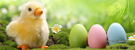Cute Easter Chick Eggs Light Bokeh, Free Facebook Timeline Profile Cover, Holidays