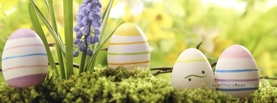 Easter Eggs Neatly Painted Grass Flower, Free Facebook Timeline Profile Cover, Holidays