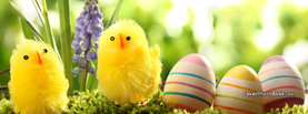 Yellow Easter Chicks Eggs, Free Facebook Timeline Profile Cover, Holidays