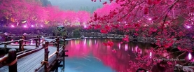 Beautiful Lake Bridge Pink Trees, Free Facebook Timeline Profile Cover, Nature