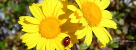 Flowers and Ladybug, Free Facebook Timeline Profile Cover, Nature