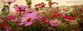 Girly Colourfull Flowers, Free Facebook Timeline Profile Cover, Nature