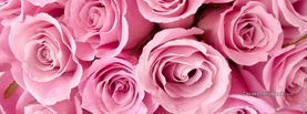 Girly Roses, Free Facebook Timeline Profile Cover, Nature