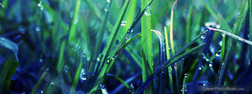 Grass Droplets Zoom, Free Facebook Timeline Profile Cover, Nature
