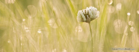 Grass Flower, Free Facebook Timeline Profile Cover, Nature