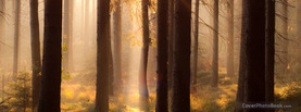 Hazy Forrest, Free Facebook Timeline Profile Cover, Nature