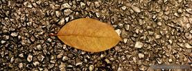 Leaf on Gravel, Free Facebook Timeline Profile Cover, Nature